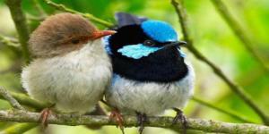 Pair-Birds